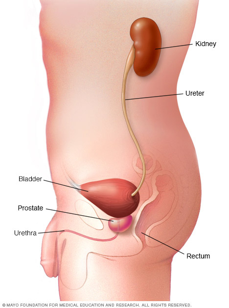 bladder cancer treatment hospital in india | fortis healthcare, Human Body